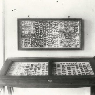 A Balatoni Múzeum lepkegyűjteménye 1941-ben