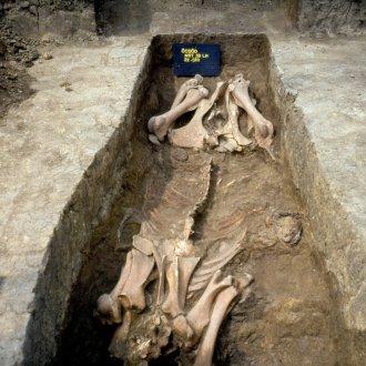 Fülkesíros temetkezés a VIII. századi griffes-indás időszakból Öcsödről