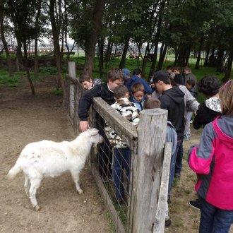 Állatparkban
