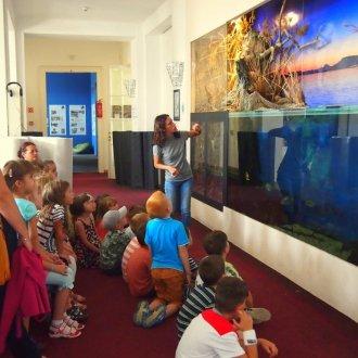 A Balatoni Halak akváriuma